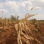 zonder gezonde bodem sterven planten