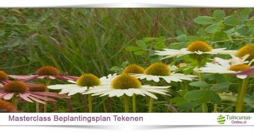 cursus beplantingsplan tekenen
