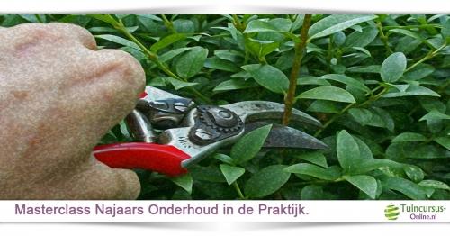 onderhoudsarme tuin binnen handbereik tuincursus online