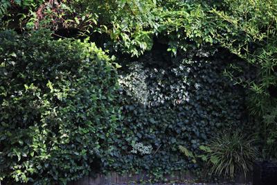 situatie voor aanpassing met tuinposter op maat tuincursus online