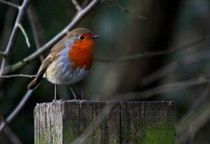 de levende tuin tuincursus online